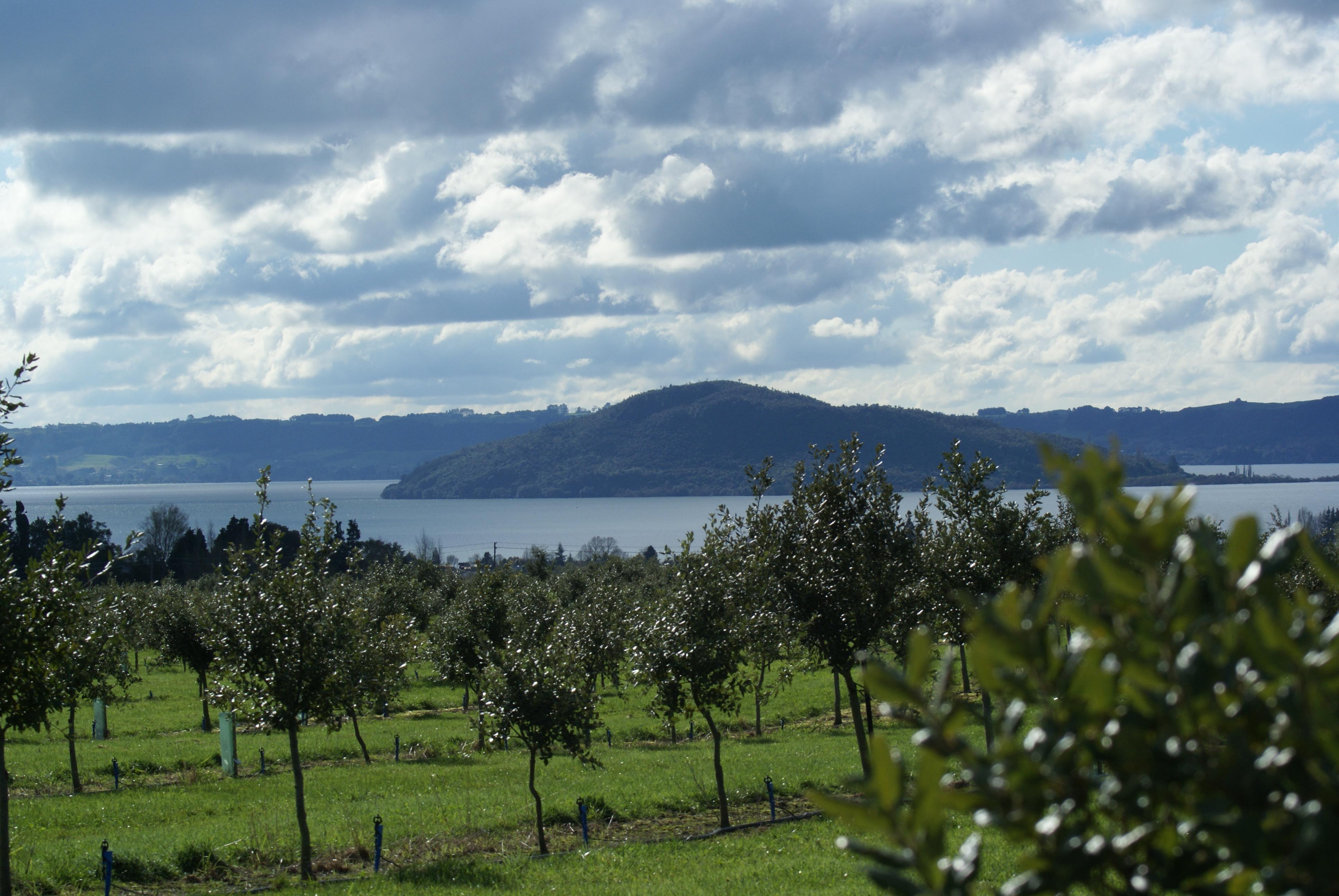 Rotorua truffiere