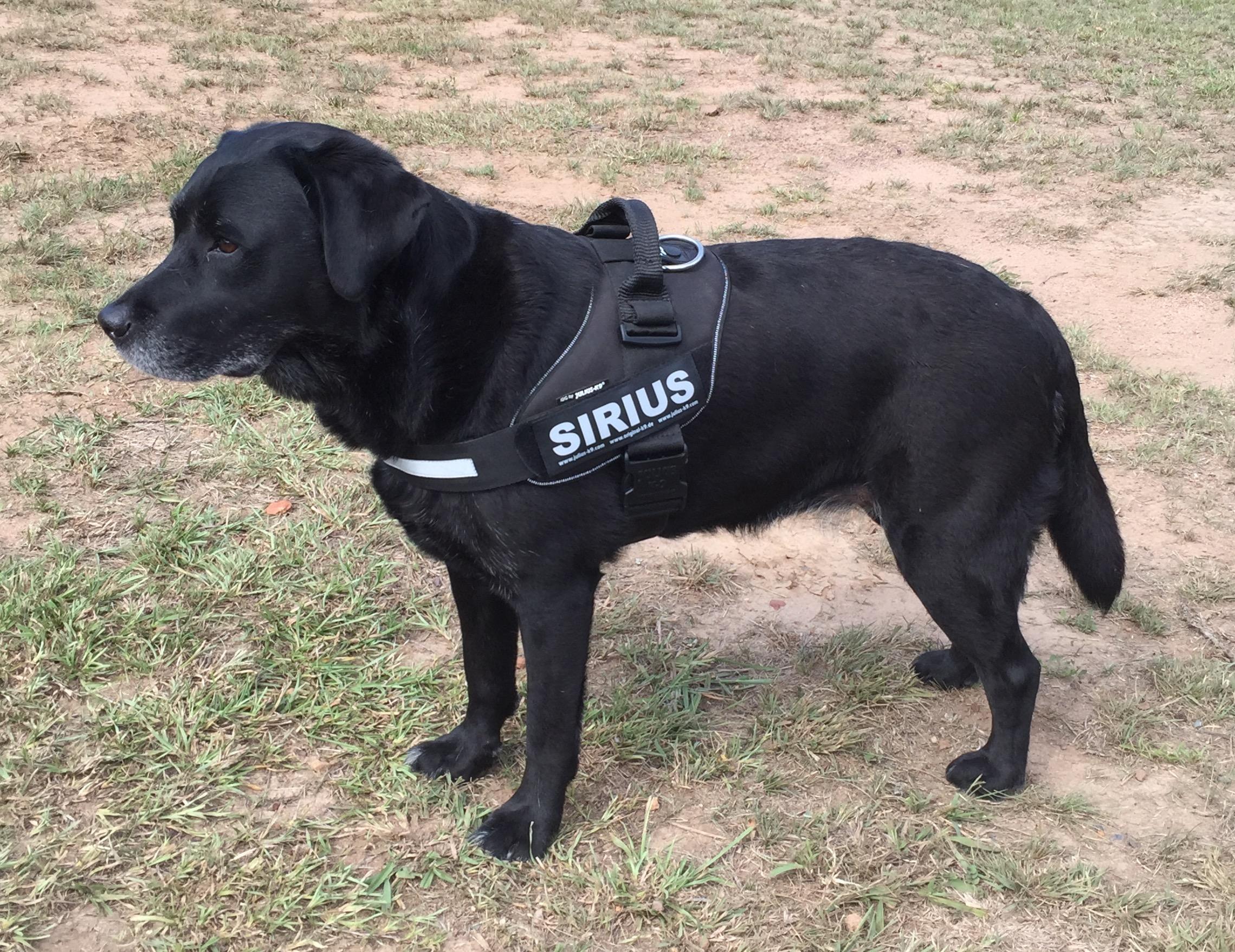 Sirius in uniform
